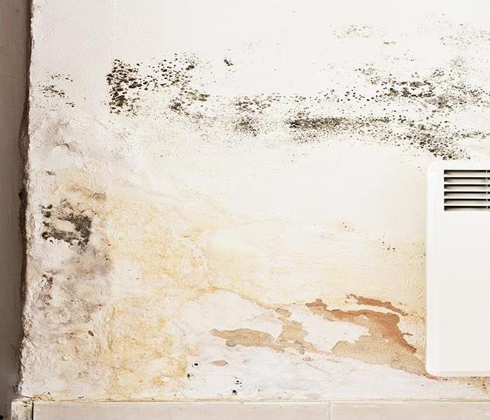 Mold Remediation Removing Mold Damage From Your Alpharetta Home Protects Your Indoor Air Quality