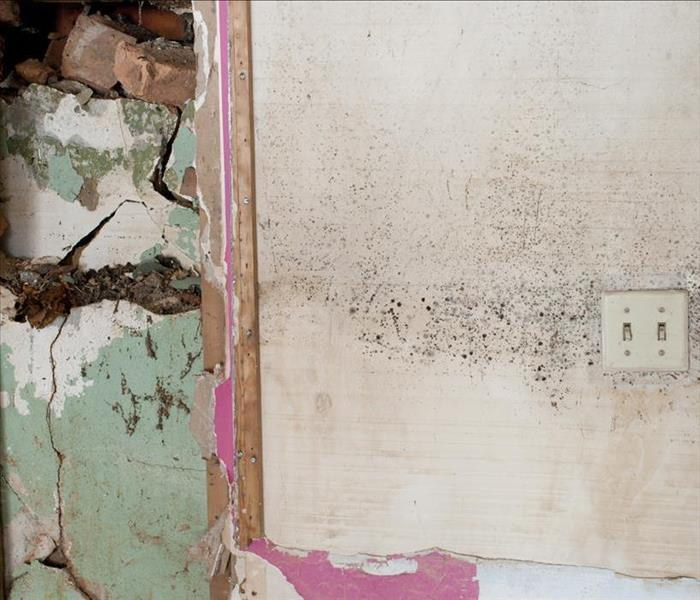 Mold Remediation Mold Remediation Tips: How To Control A Mold Outbreak